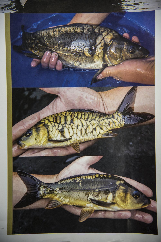 10tonies fish.jpg