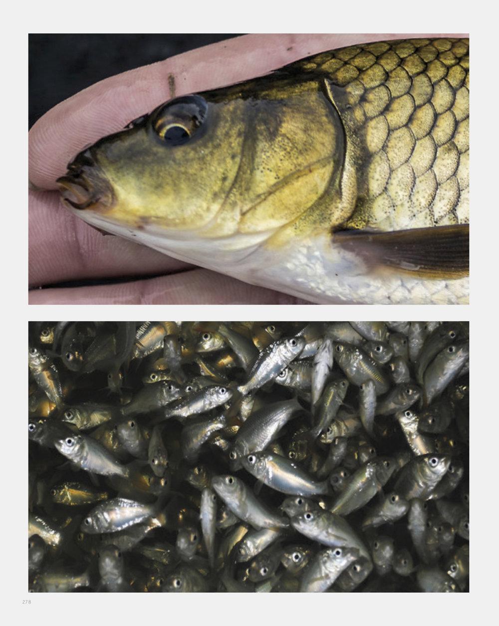 fish1 copy.jpg