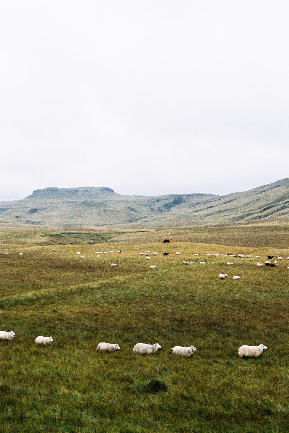 ICELAND_-95.jpg
