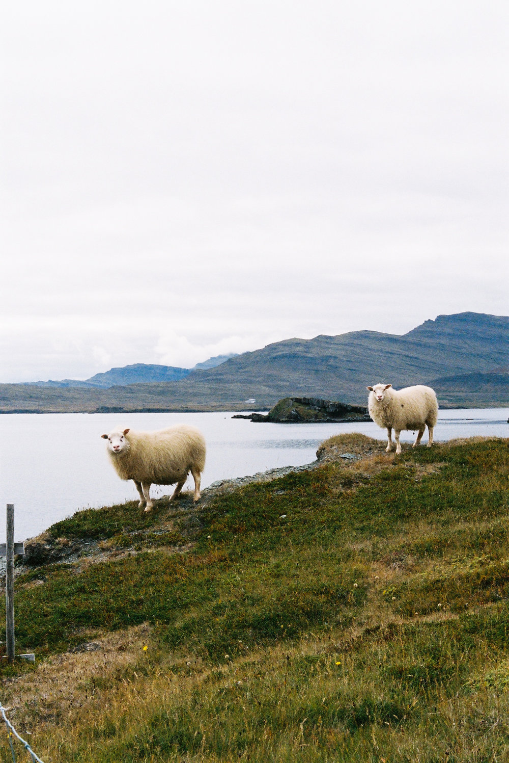 ICELAND_-118.jpg