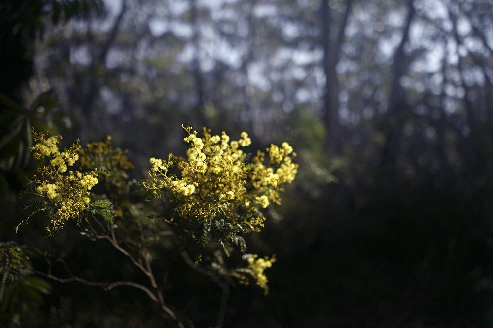 Sensuous Delusion (bloom)