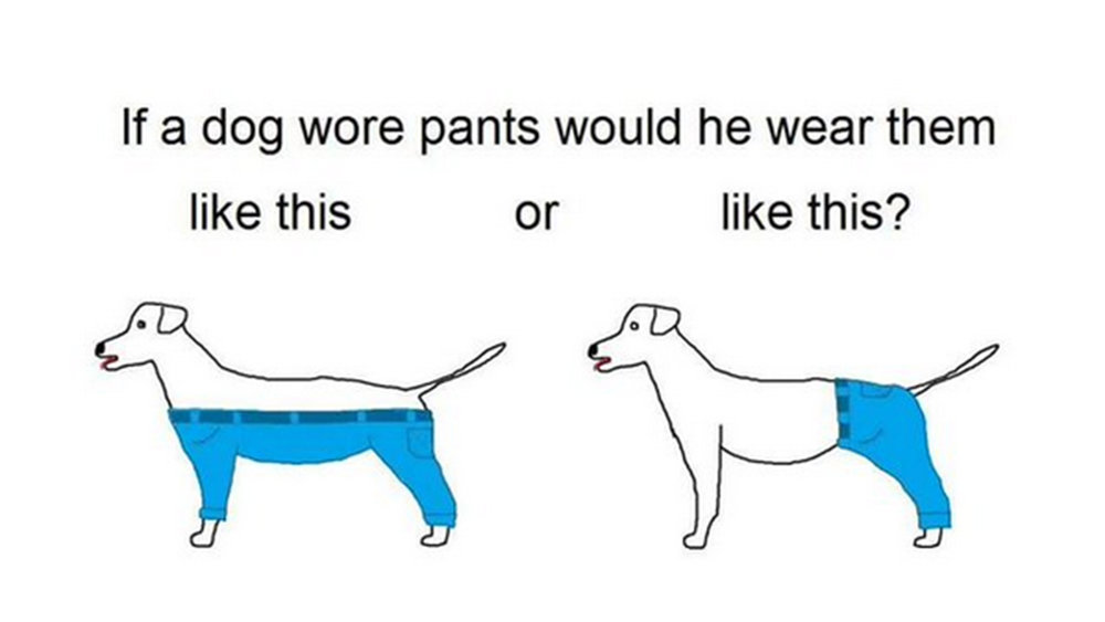 dog-pants-today-151230-tease_0_1a27b77f361f07e5a1574feab11f84e7.jpg