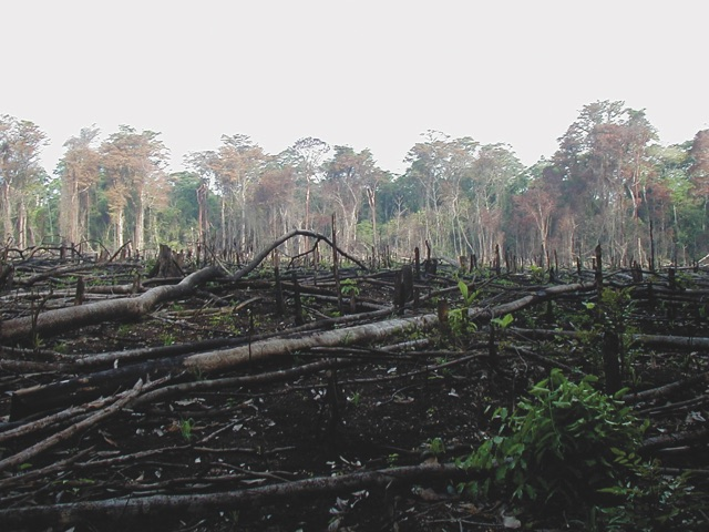 Deforestation   using the 'slash and burn' method to make room for agriculture