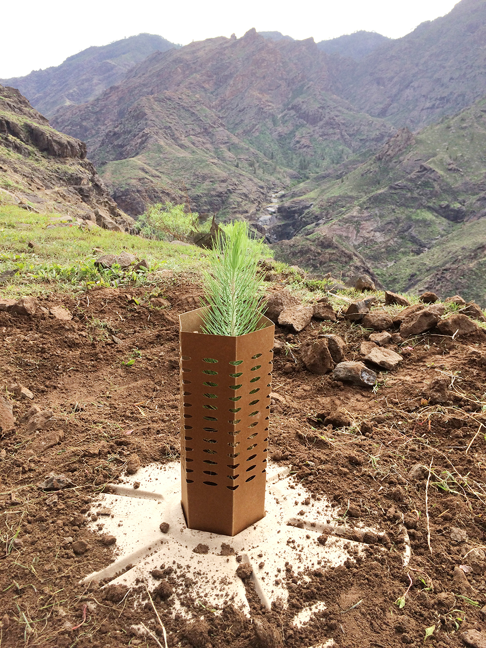 Stunning views from the planting site on Cran Canaria