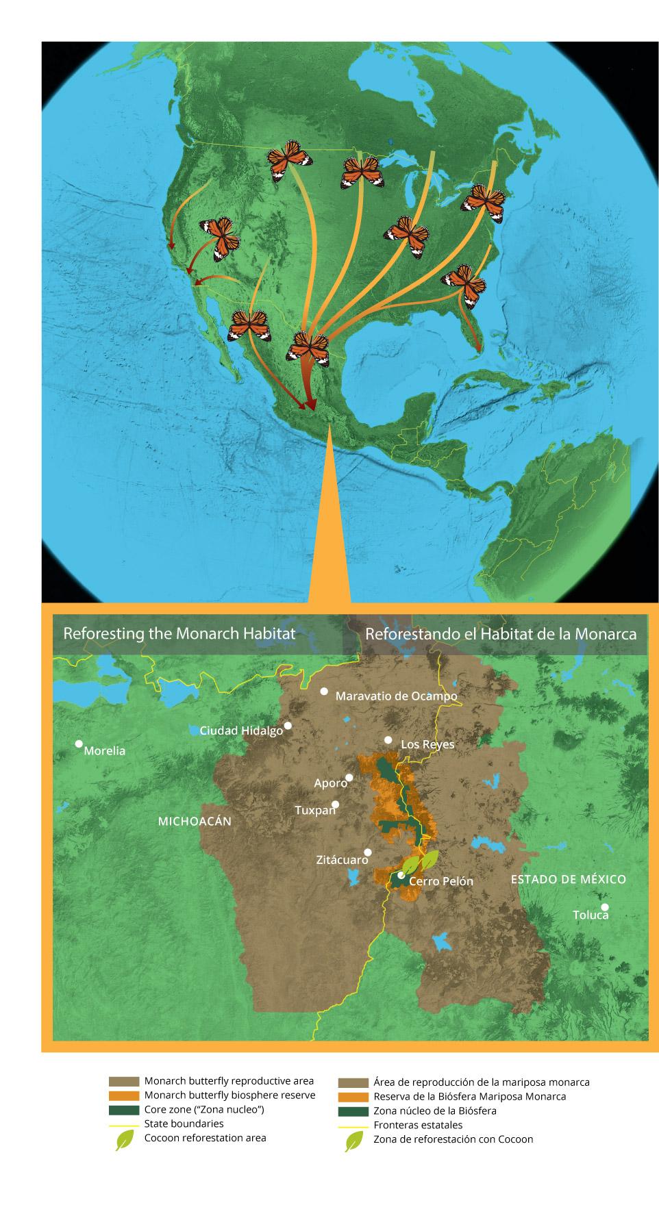Mexico Michoacan: Monarch Migration Route — Land Life Magazine