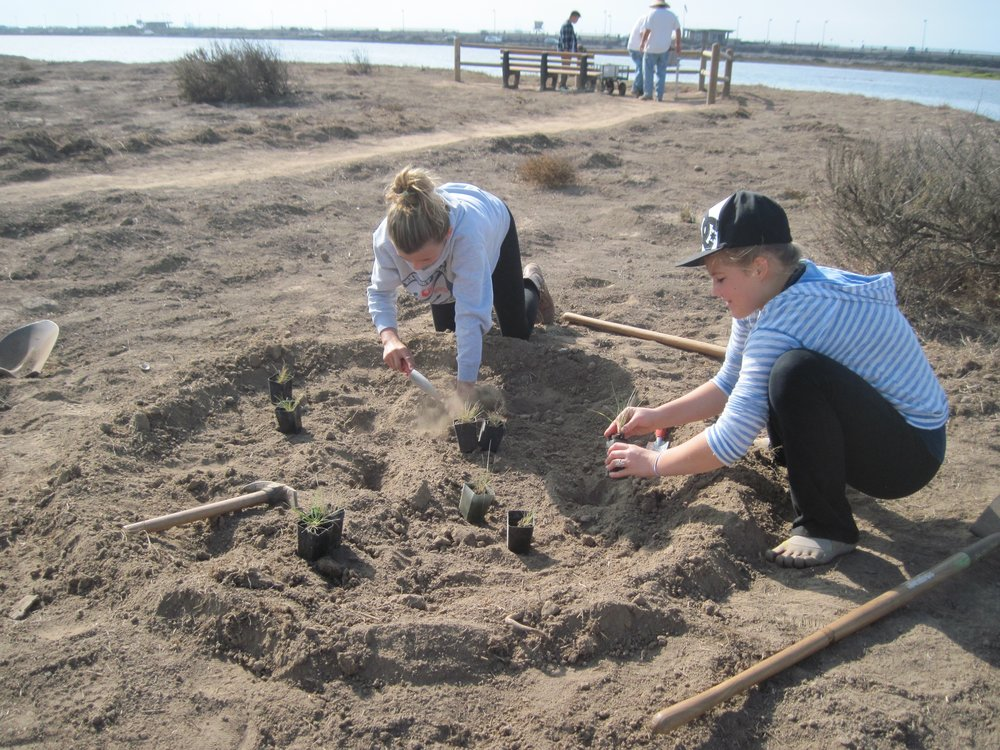 Native plant restoration at Bolsa Chica Wetlands with Bolsa Chica Junior Stewards