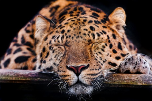 photo credit: Tambako the Jaguar via photopin cc