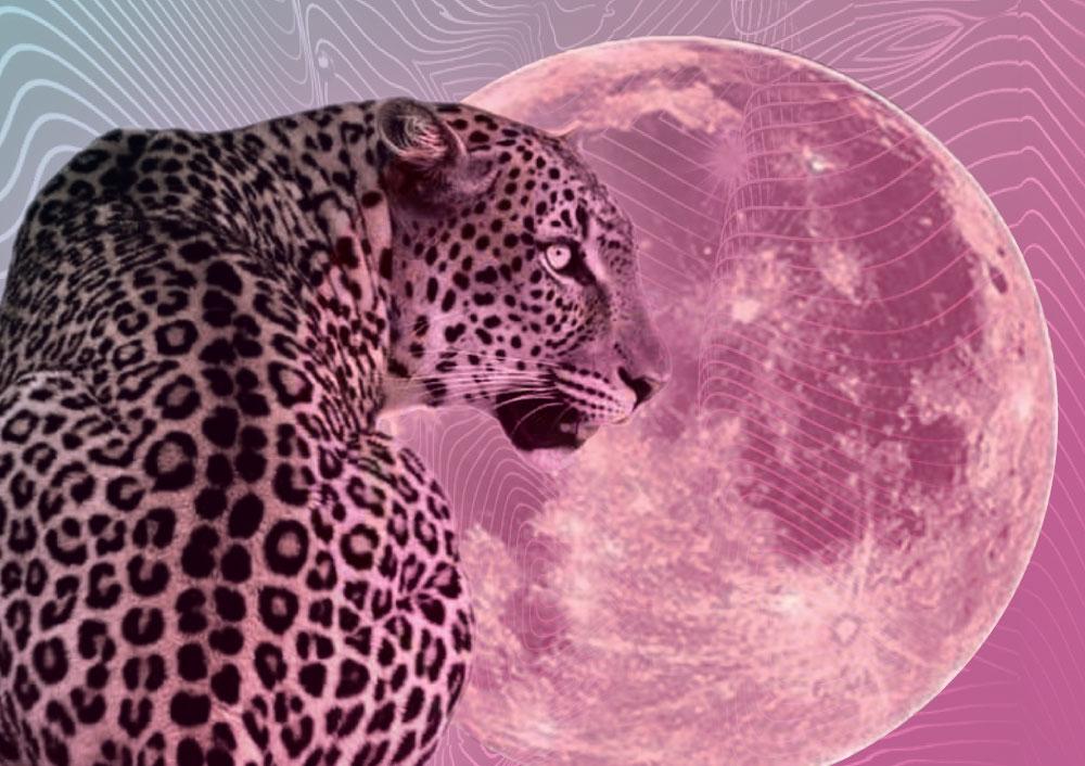 pink-moon-kelsey-roenau.jpg
