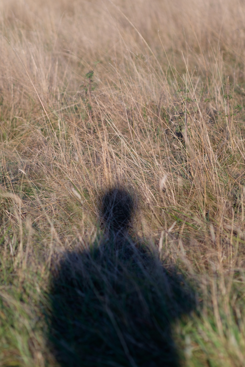 piero_serra_shadow.jpg