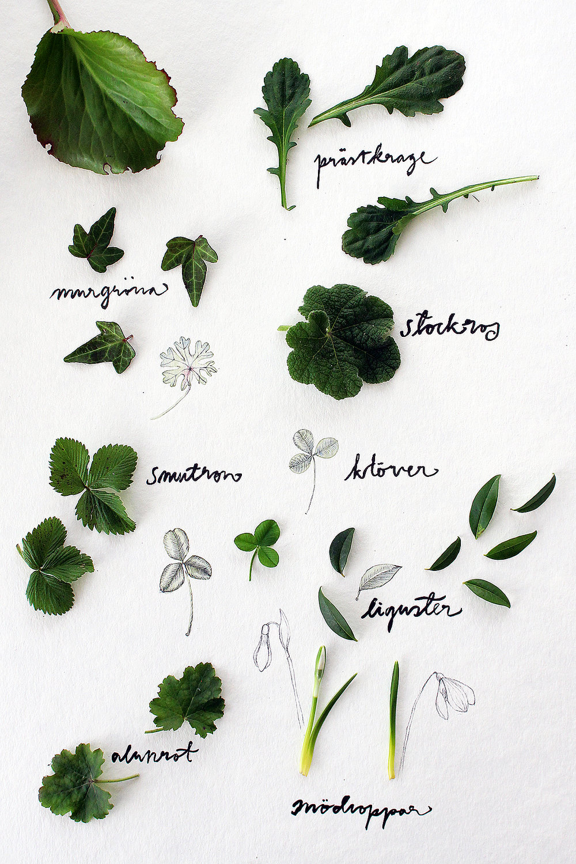 Greenery_Pantone_Garden_Moodboard_HannaWendelbo