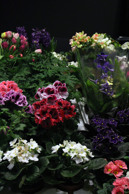 Blomsterfrämjandet_mercedesBenz
