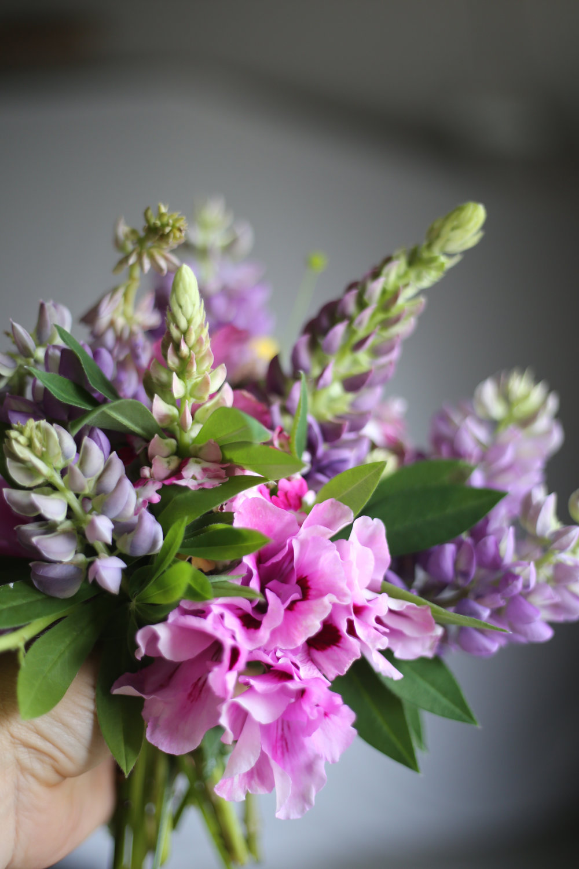 Flowers_HannaWendelbo