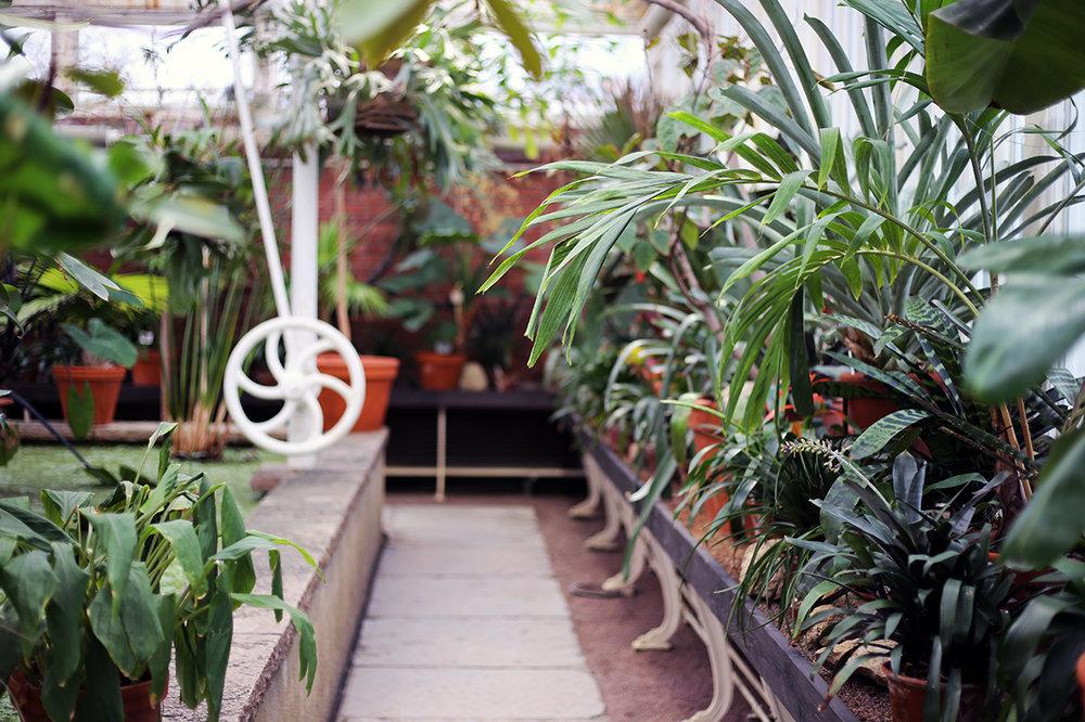 Gröna_Växter_Palmhuset.jpg