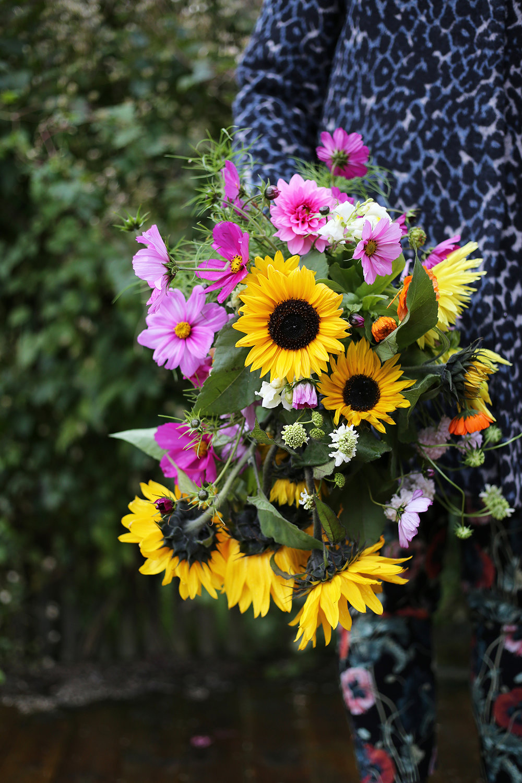 Plockar in blommor i stora fång i september.