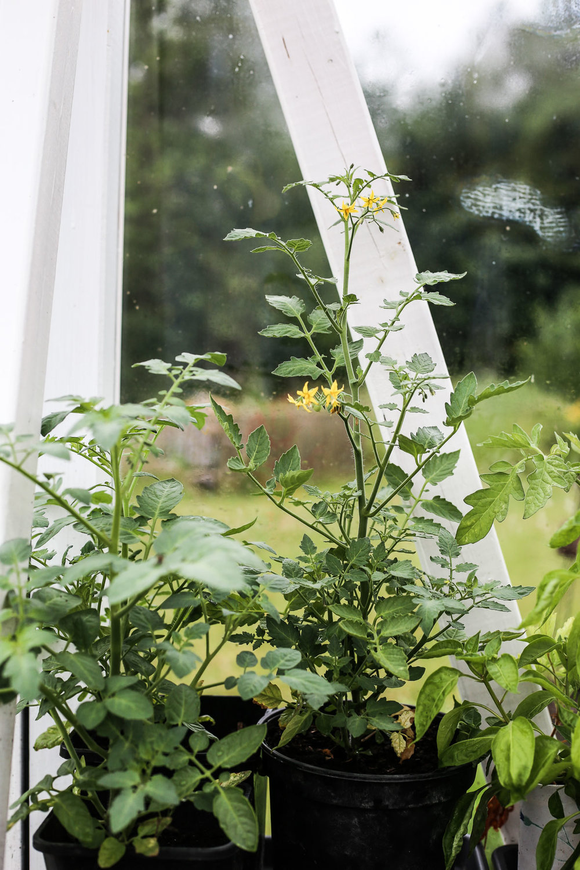 HannaWendelbo_Trädgård-10.jpg
