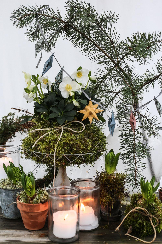 Christmas_star_HannaWendelbo-15.jpg