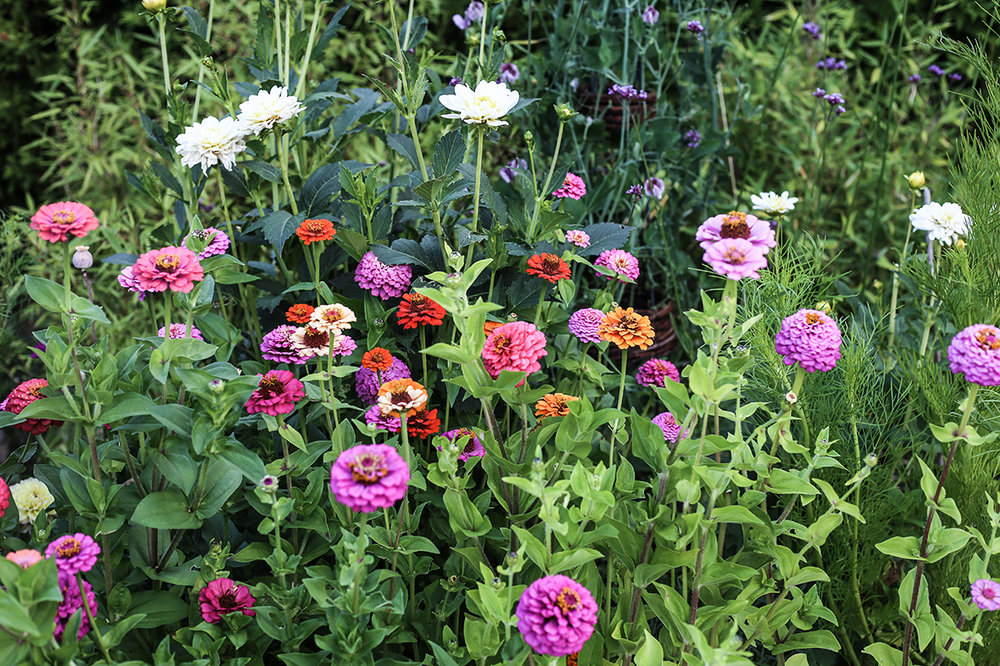 Blommor_juli-HannaWendelbo.jpg