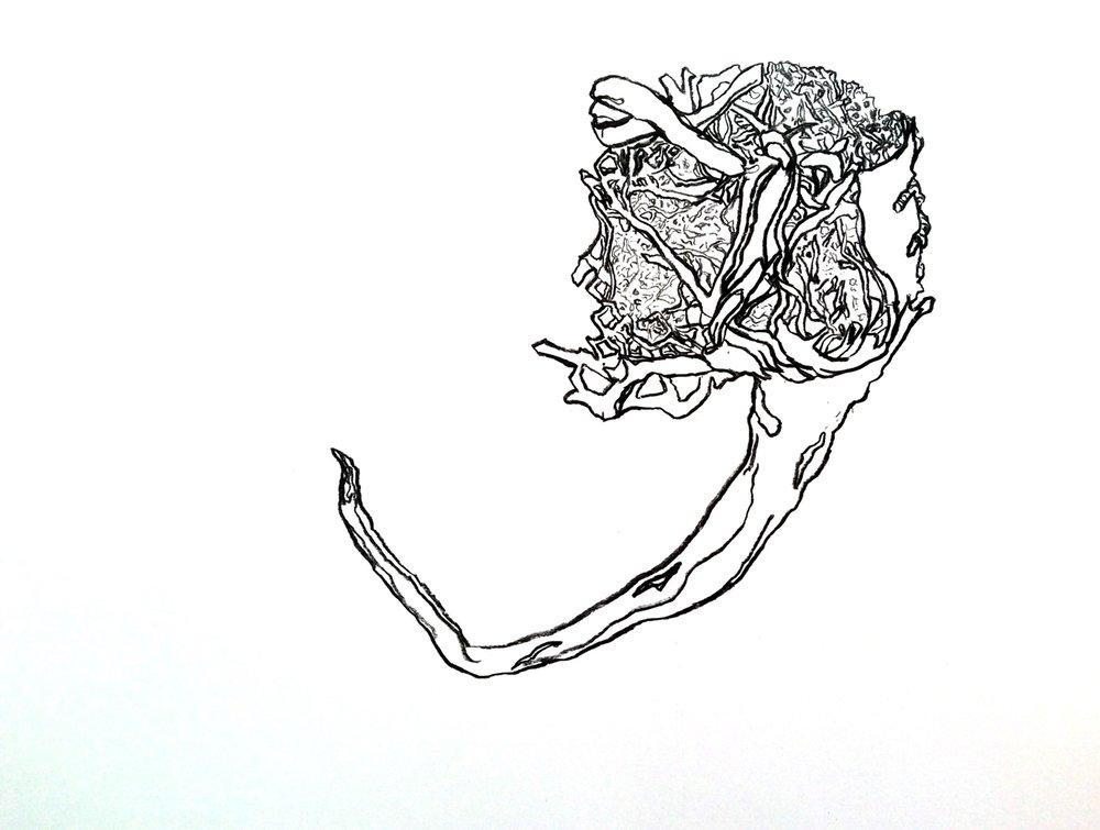 1500-seaweed-drawing.jpg