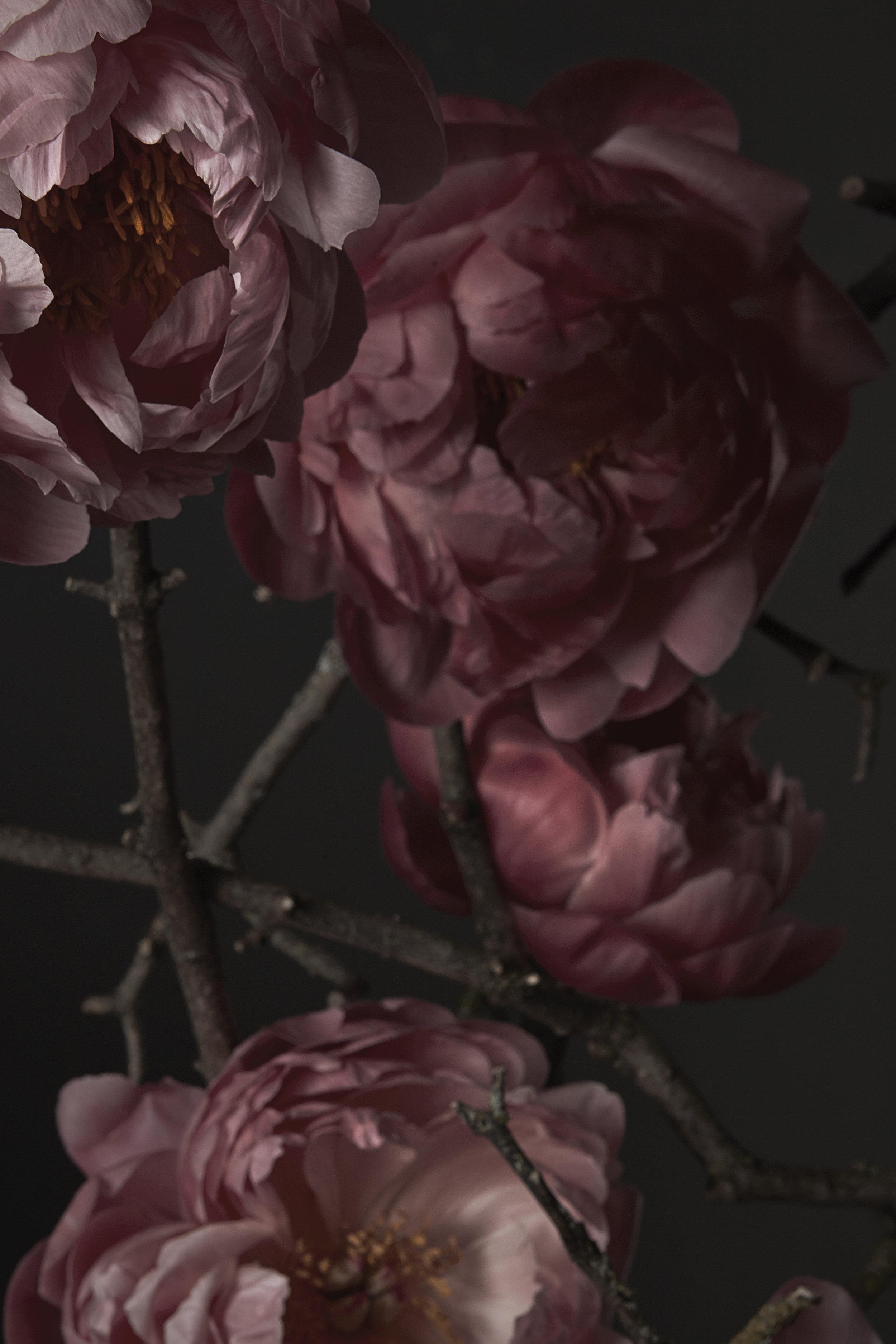 Epoch Floral