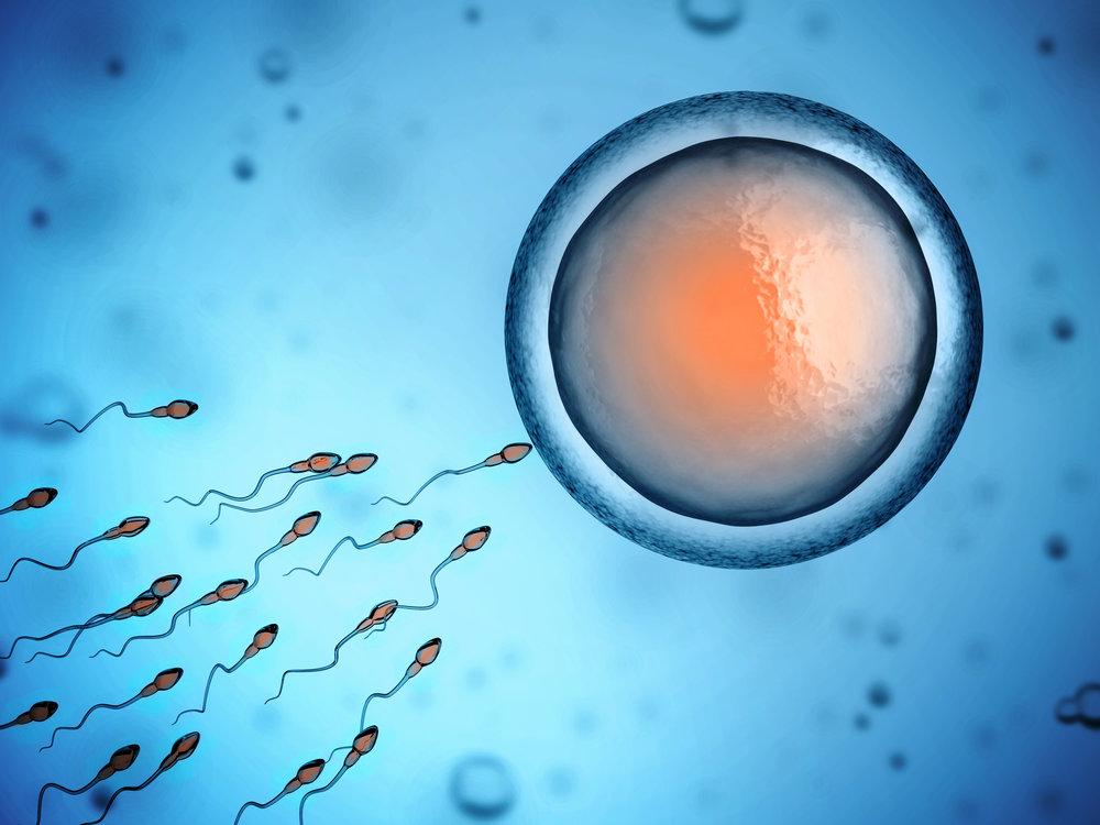 Fertility-Hypnotherapy-6