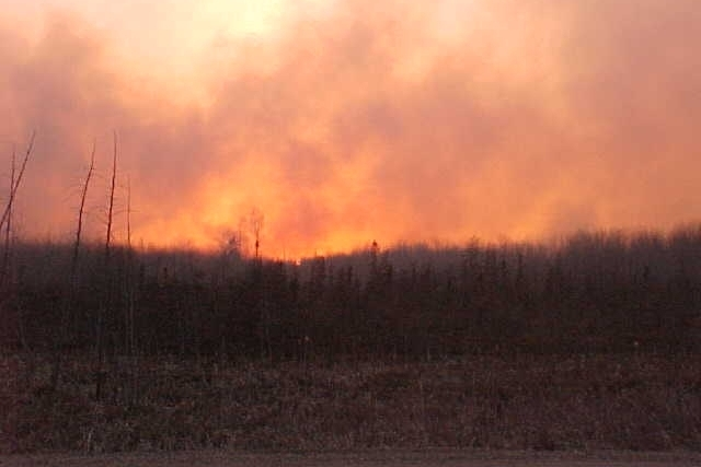 2004 Forest Fire