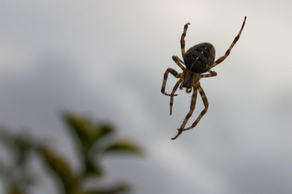 spider-1372048.jpg