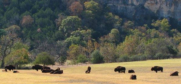 Frio Canyon Buffalo.jpg