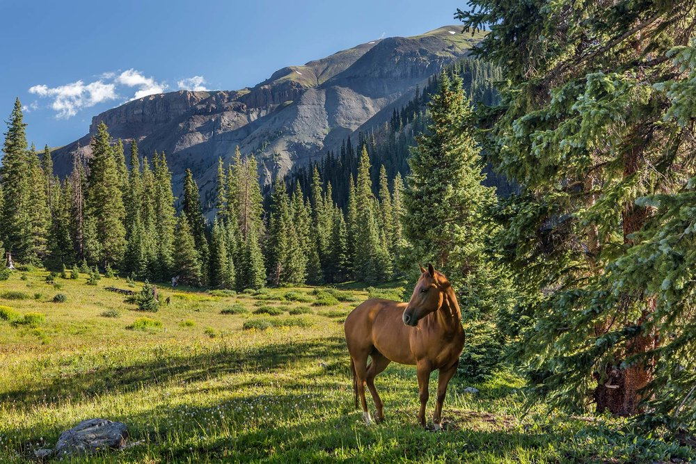 Horse-Meadow-w-2nd---History,-website.jpg