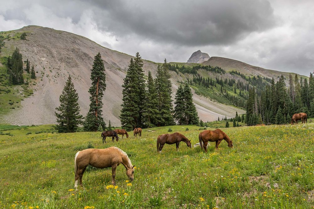 Horse-meadow-misty.jpg