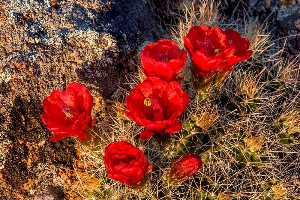 4109,-Cactus-Flower.jpg
