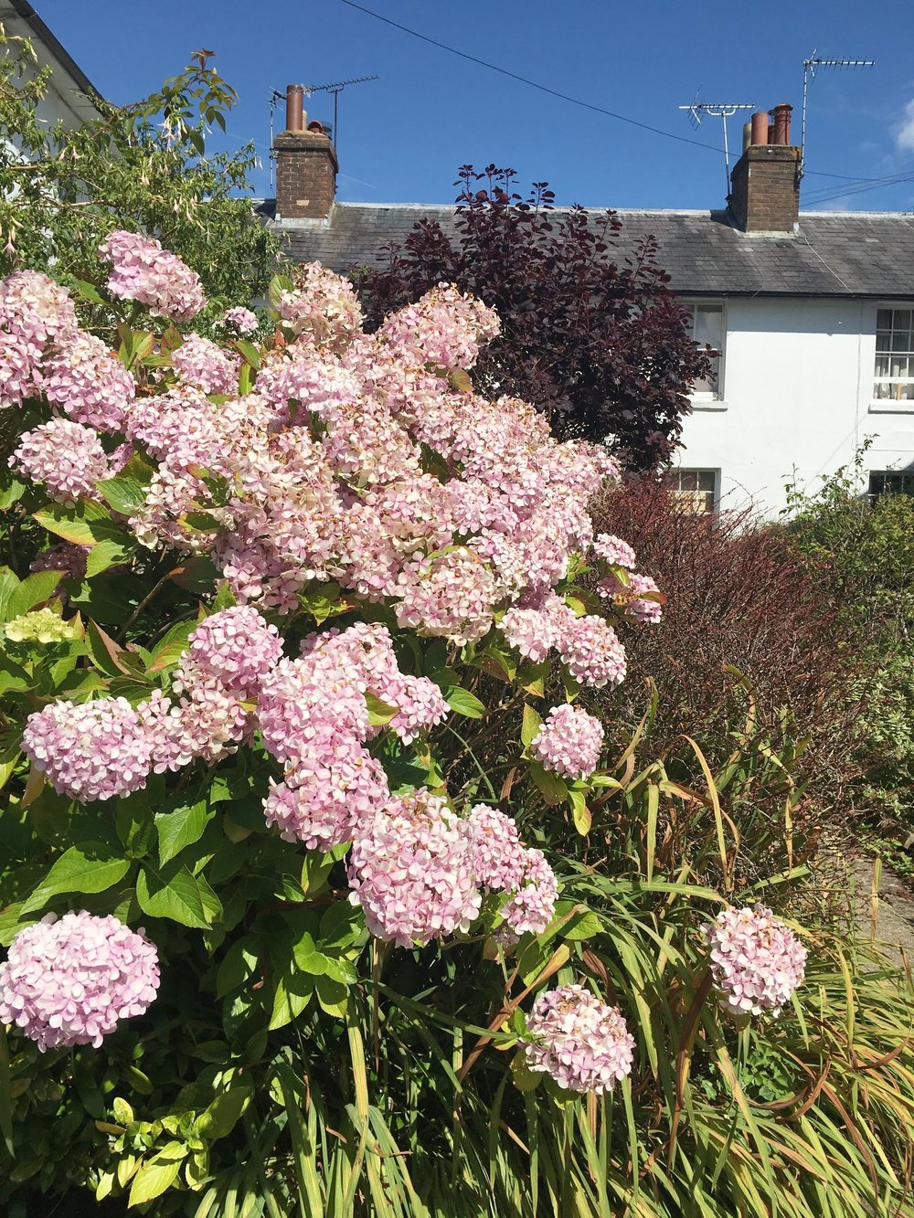 The beautiful village of Frant near Tunbridge Wells is a favourite place to go and house spot, this one has my favourite flowers - hydrangeas - in the garden. I just love a wild garden!