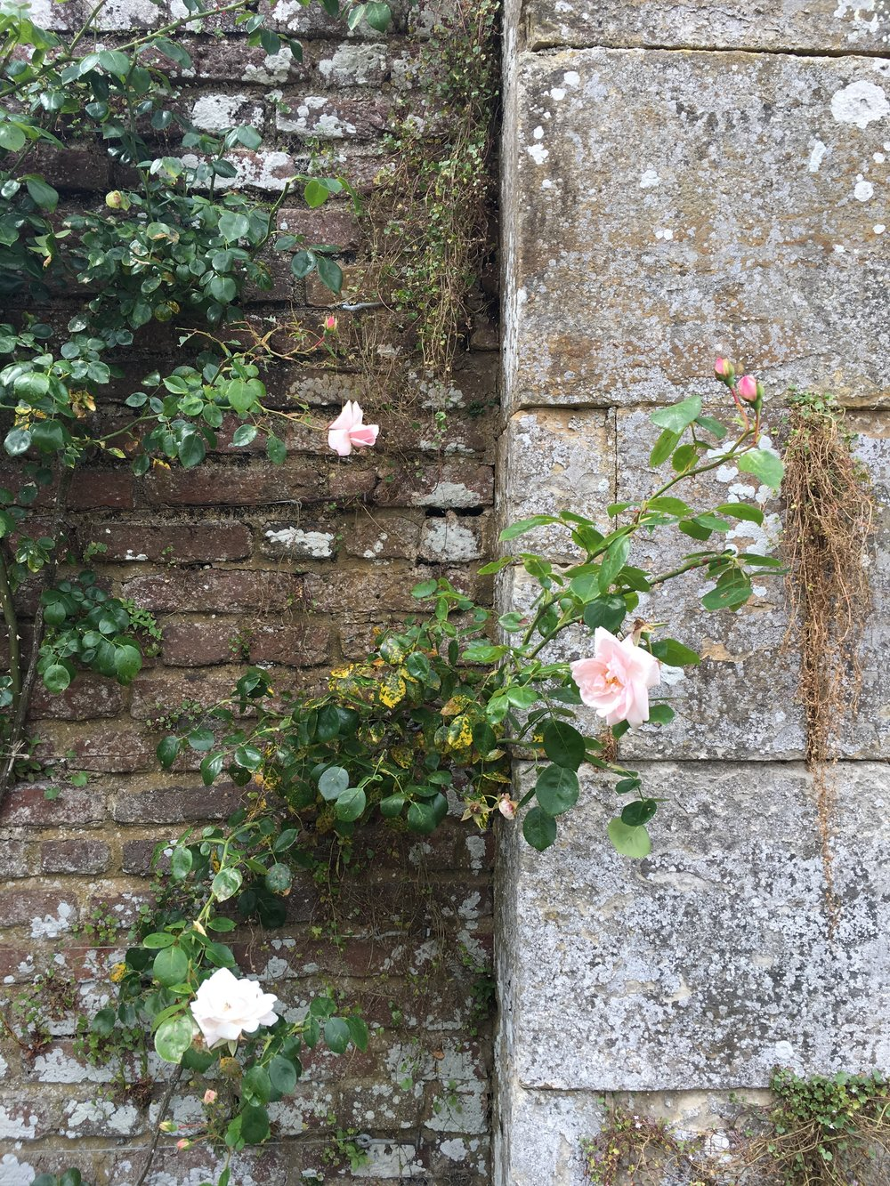 Those roses on a brick wall again! The classic rose is a beautiful & traditional flower to use at your wedding.