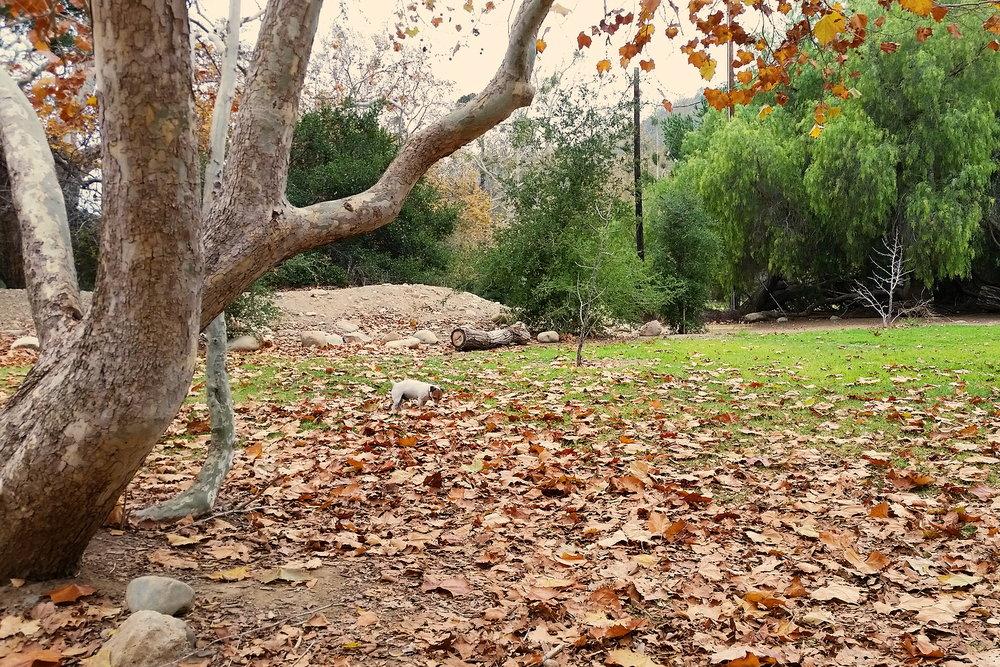 Park (Fall shot)