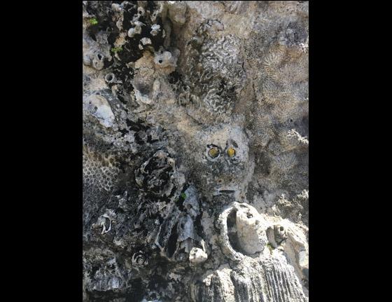 FossilsAndMonkeyFace.jpg