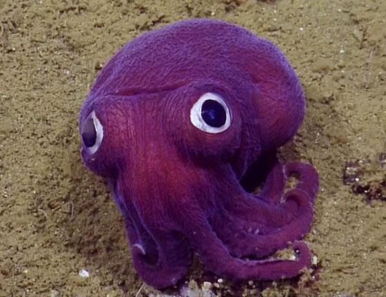 GoogleyedSquid.jpg