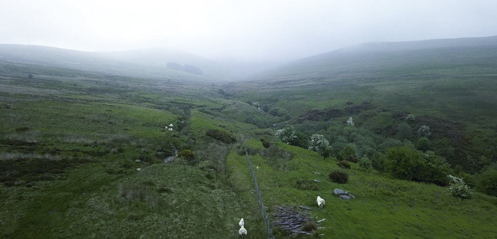 The Berwyn Mountain range in northeast Wales.  The copse of trees in the fog near the horizon is where Huw Lloyd saw the strange lights.