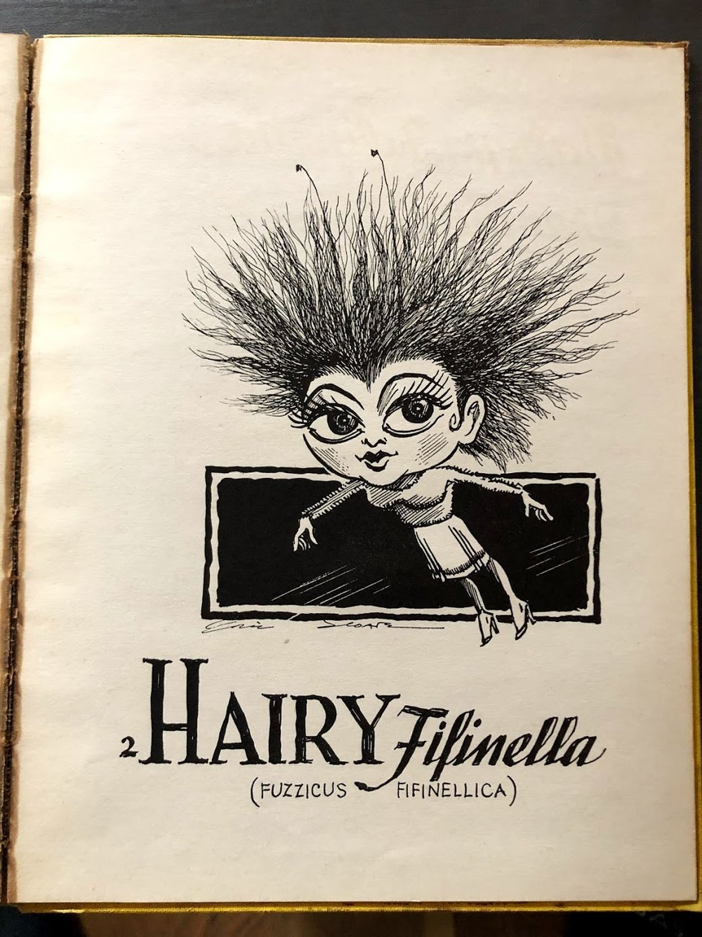 Hairy Fifinella