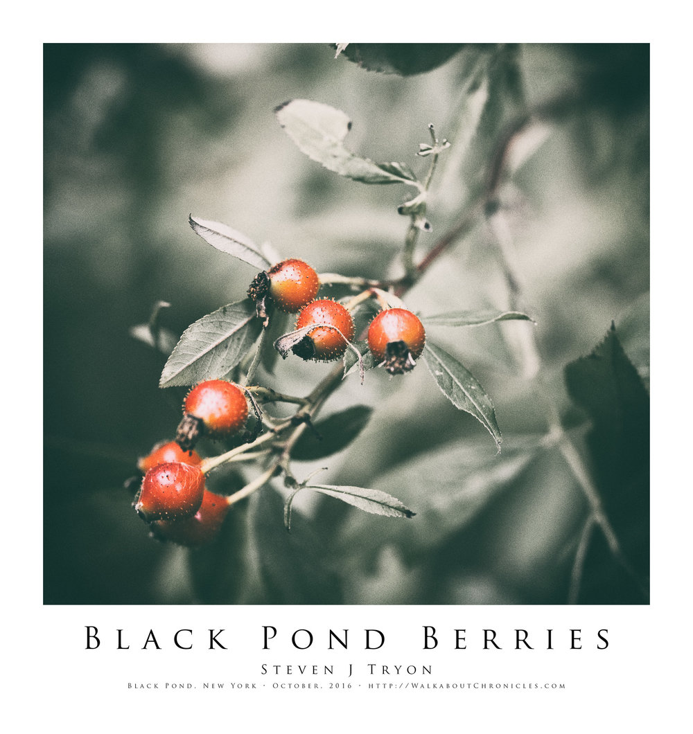 Black Pond Berries