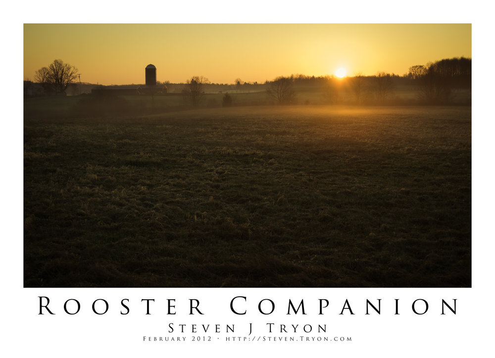 Rooster Companion