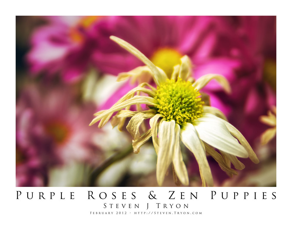 Purple Roses & Zen Puppies