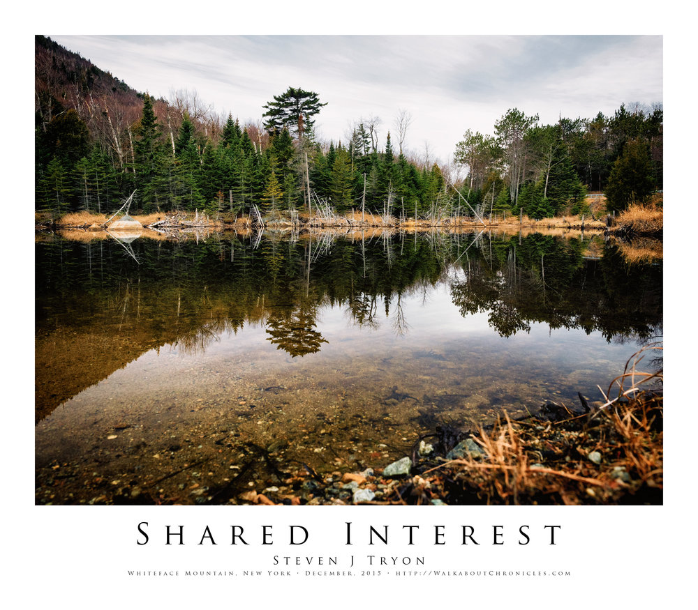 Shared Interest