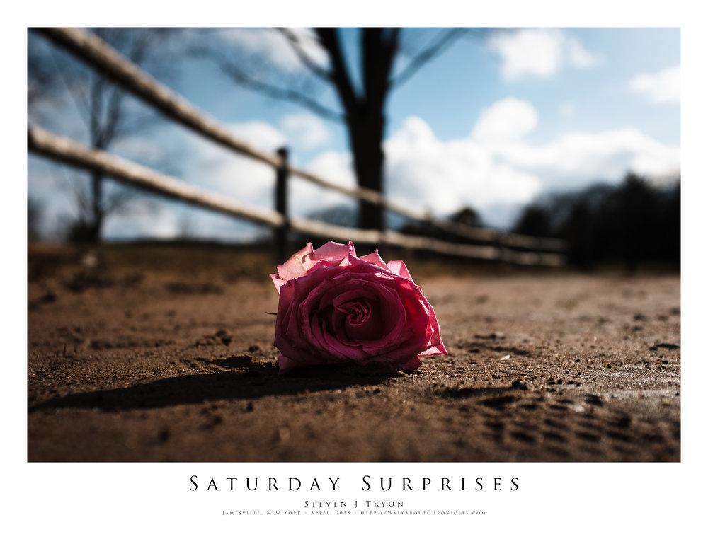Saturday Surprises