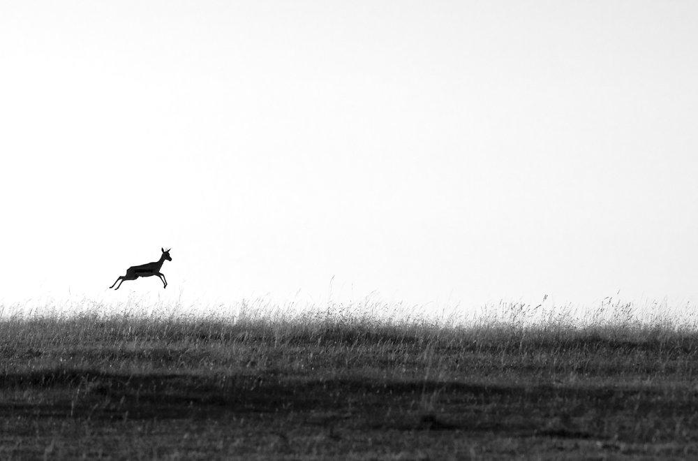 2011. Masai Mara, Kenya.