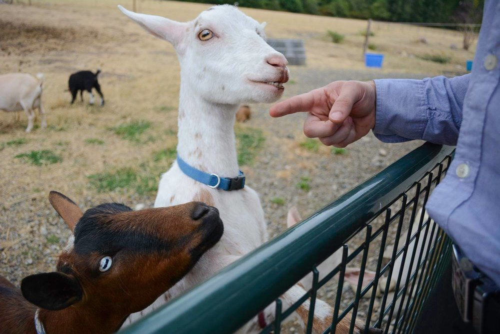 Black Diamond Gardens has friendly goats onsite for guests to pet