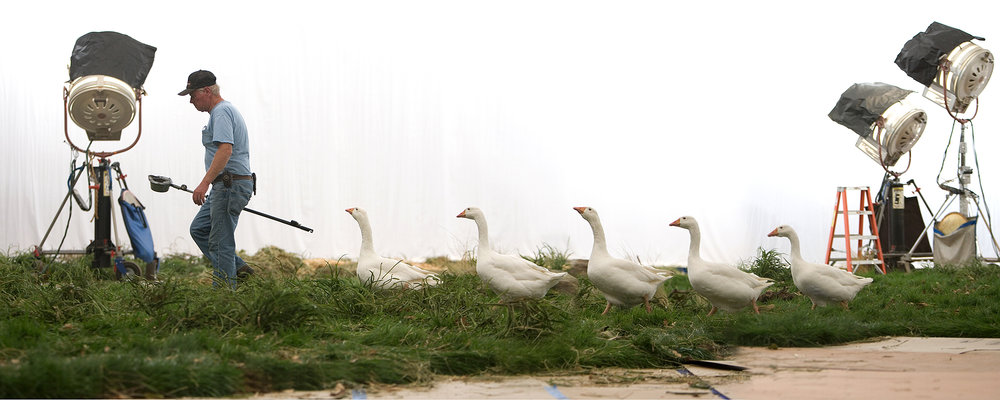 ducksb.jpg