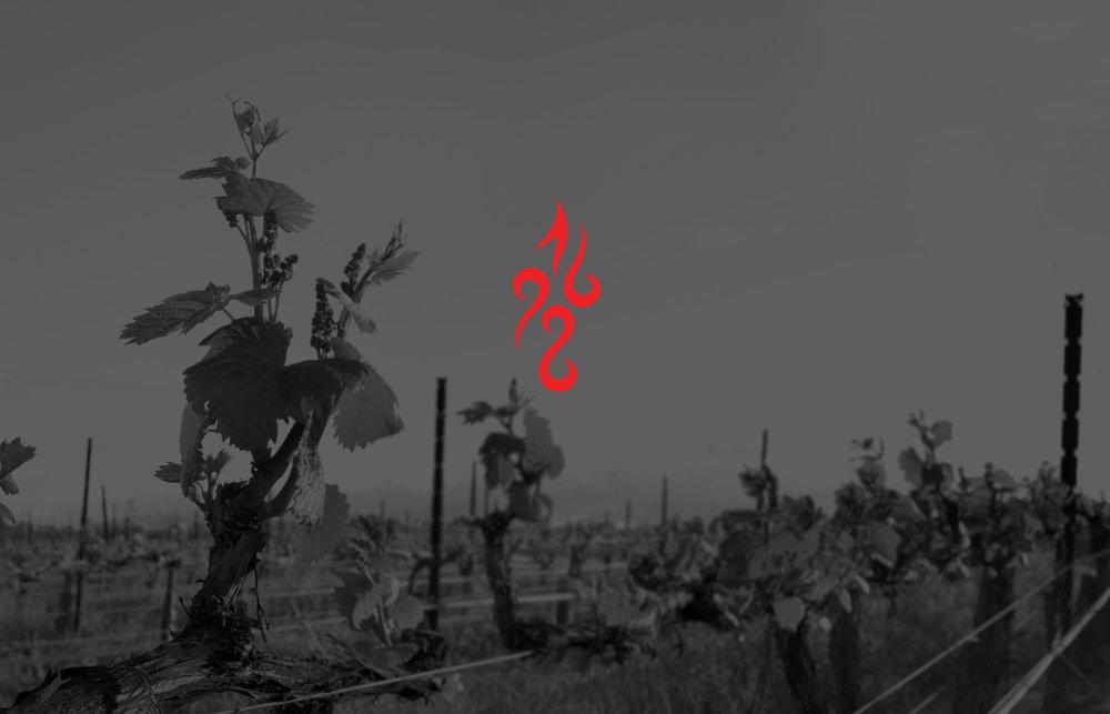 Wine_109+copy3.0.jpg