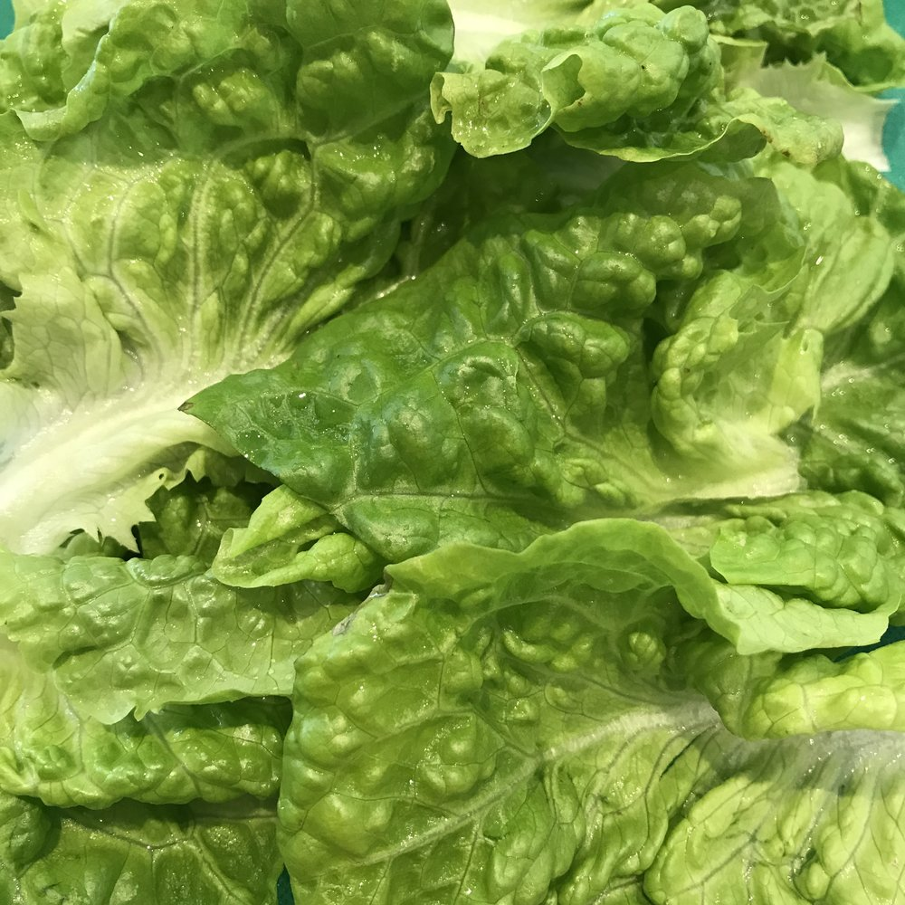 lettuce from 'the great (green) wall' of Charlotte Place