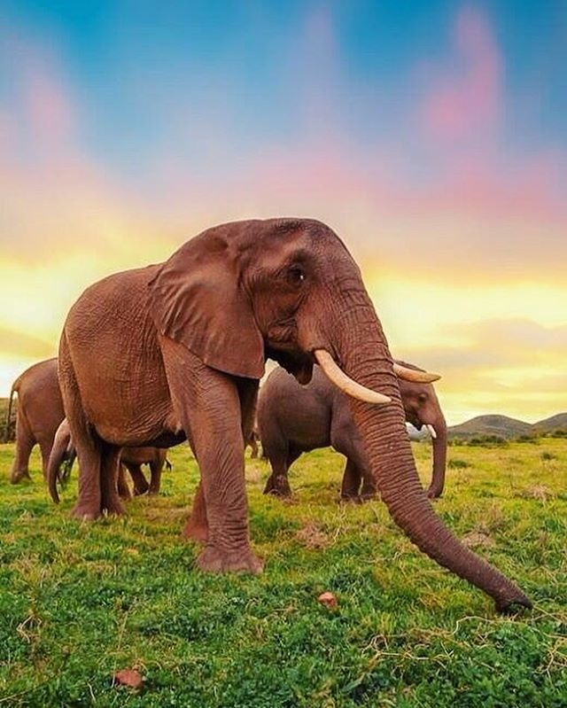 Here's to another #worldelephantday 🐘 At @wildlifewakeupcall we have chosen the #elephant as our beacon animal to serve as an example of the precious wildlife being lost at rapid rates all over the world. No animal is wiser, more caring, intuitive, and downright delightful than #elephants ...Join us in celebrating the continued efforts to keep these giants around. . . . #World #wildlifephotography #conservation #endangered #tusker #tusk #bigcats #Africa #animals #nature #beauty #earth #nonprofit #stoppoaching #stoptrophyhunting #safari #tanzania #kenya #wildlifeconservation #celebrate #wild #wildlife