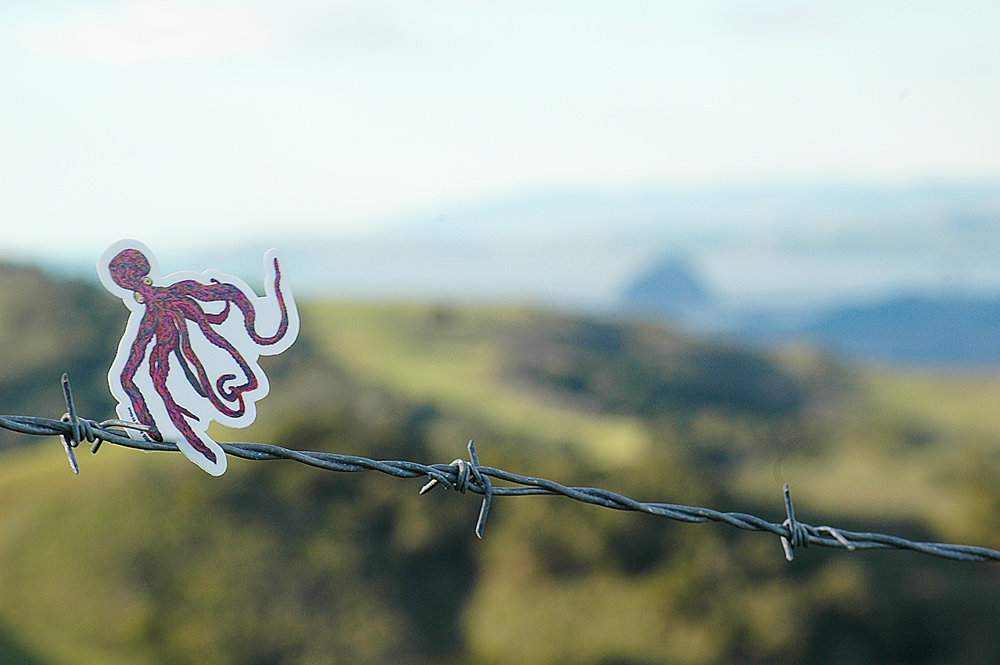 Octopus Overlooking Morro Bay