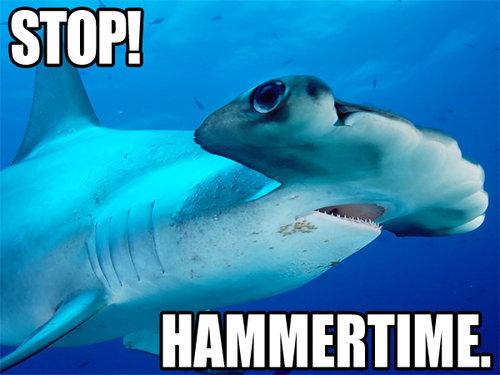 43-shark-memes-shark-week--large-msg-131232916572
